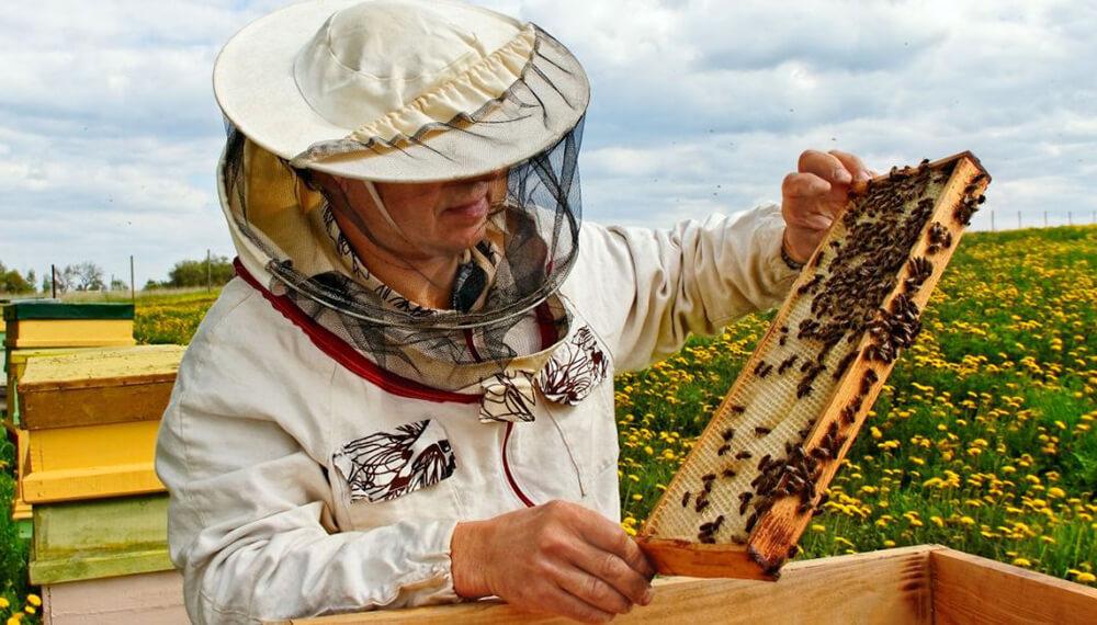 apicultura campo