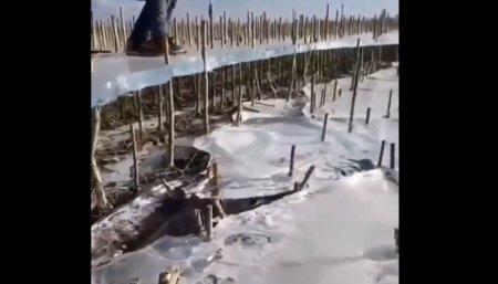 guanacos en Puerto Pirámides, Chubut