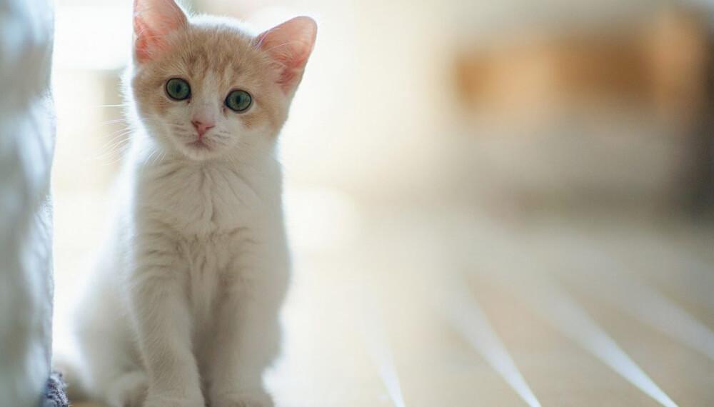 gato infocampo