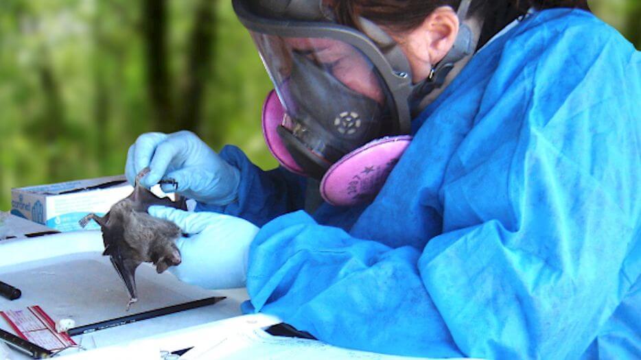 investigadoras murcielago
