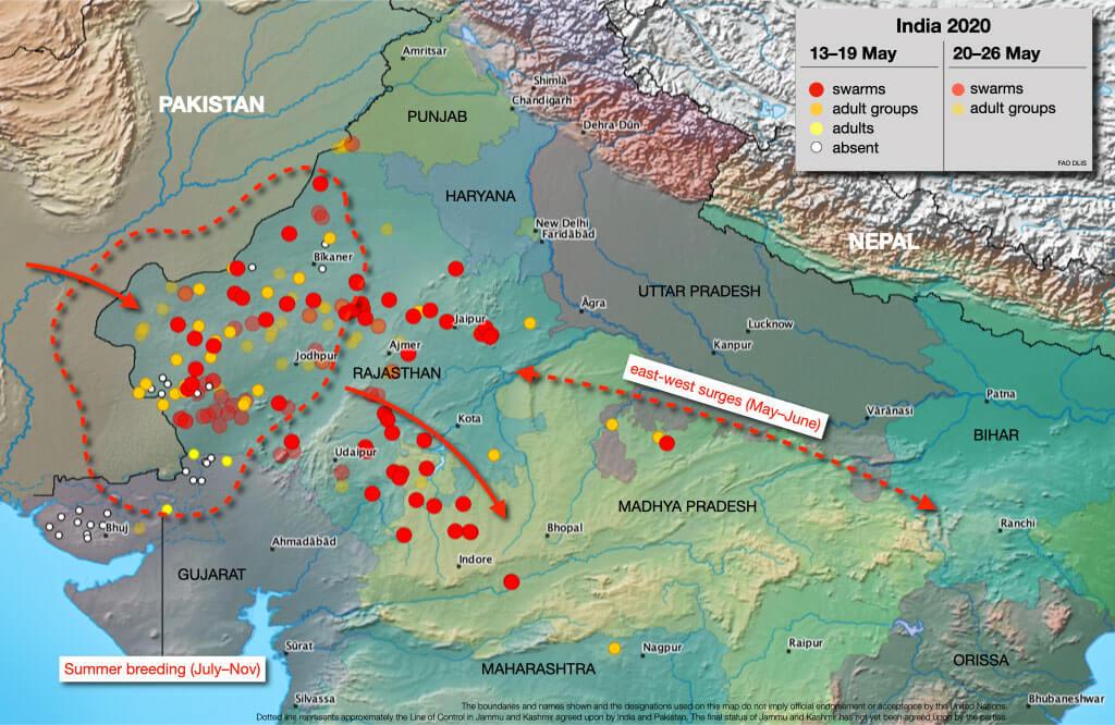 Migración de Langosta - Mayo 2020