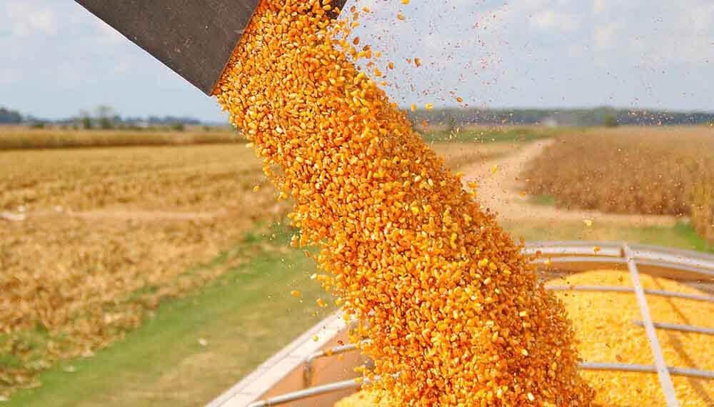 cosecha maiz infocampo