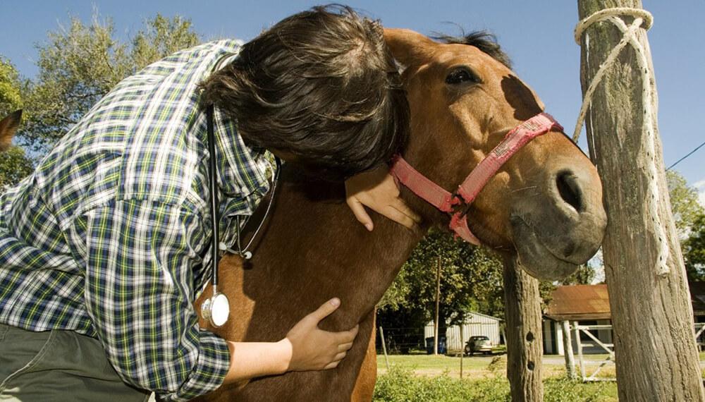 veterinario caballo
