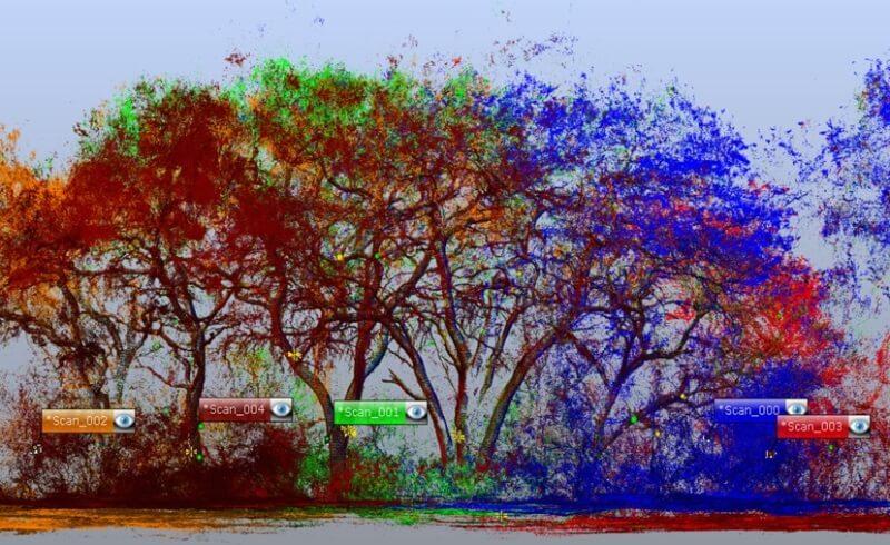 presentación 3D bosques