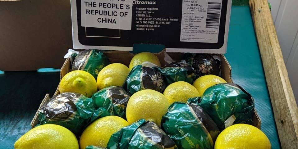 Exportación - Limones - China
