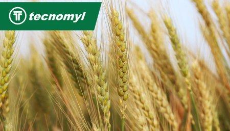Soja granos