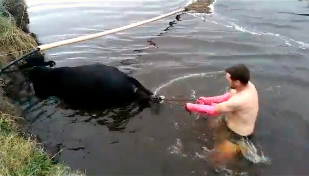 parto agua veterinario