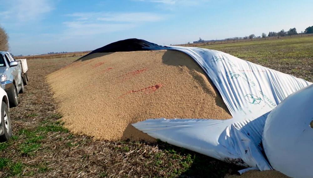 Otro caso de vandalismo rural: le rompieron silobolsas y rociaron los  granos con curasemillas | Infocampo