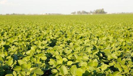 Conservación de suelos - Sustentabilidad- Rastrojo