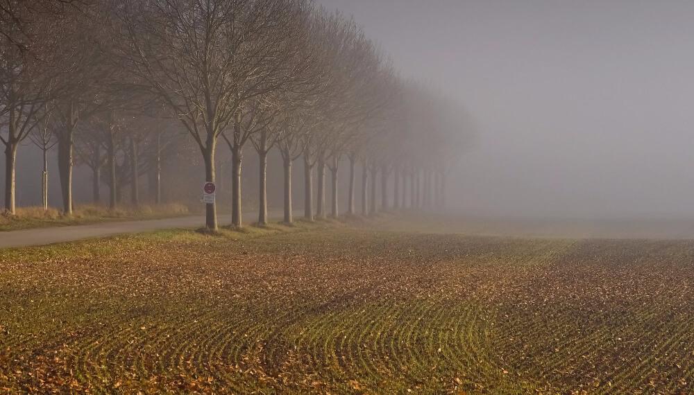 Clima - Neblina - Campo