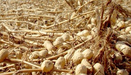 Basterra recorriendo granjas en Daireaux