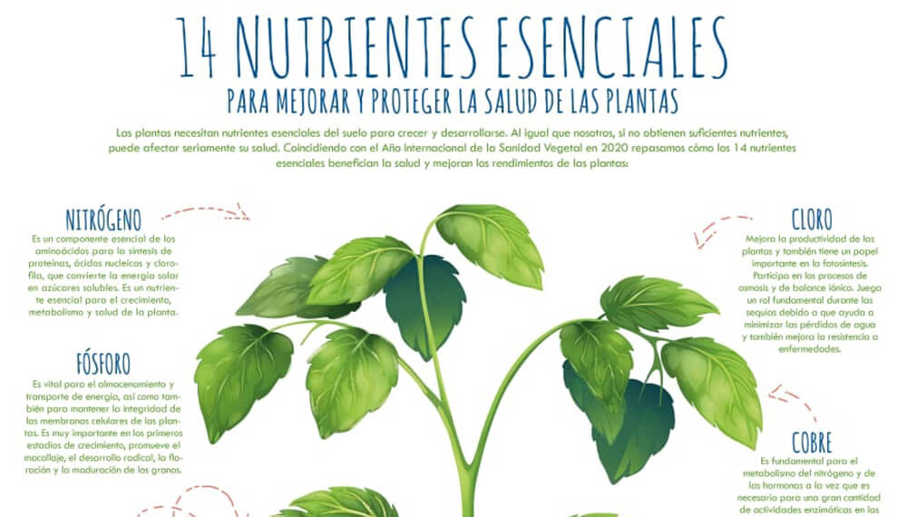 Fertilizar Asociación Civil - Nutrientes