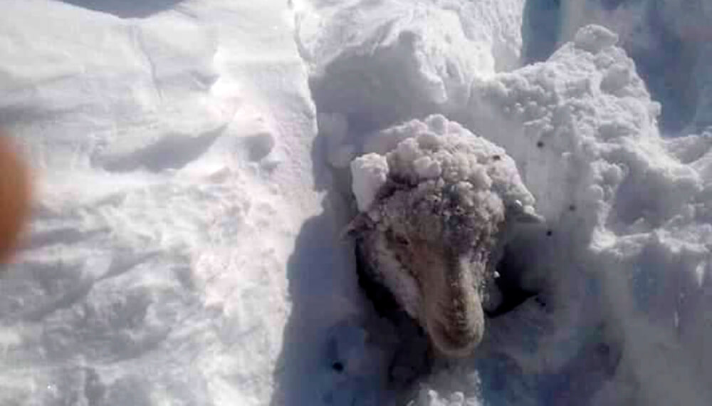 ola polar cra