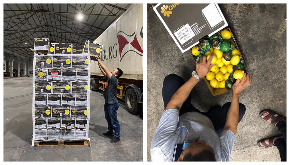 Llegada el primer embarque de limon a Hong Kong