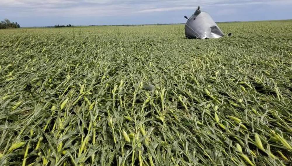Maiz - Iowa - Daño