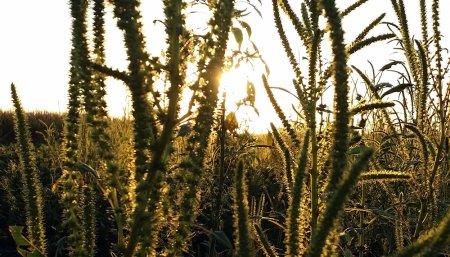fertilizantes soja