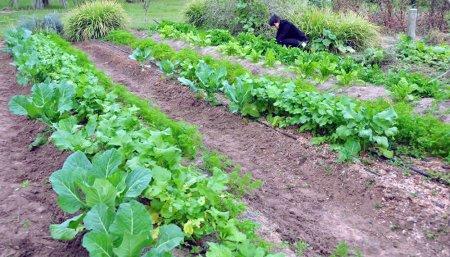 inta huerta agroecologica