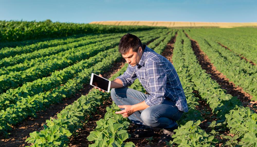 Tecnico - Campo - Tablet- Tecnología - Soja