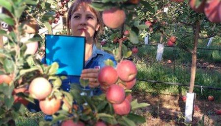 trabajador recolectando manzanas