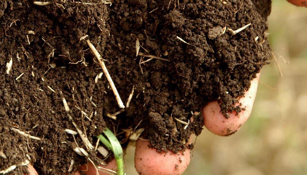 Manos con tierra - Buenas practicas agricolas