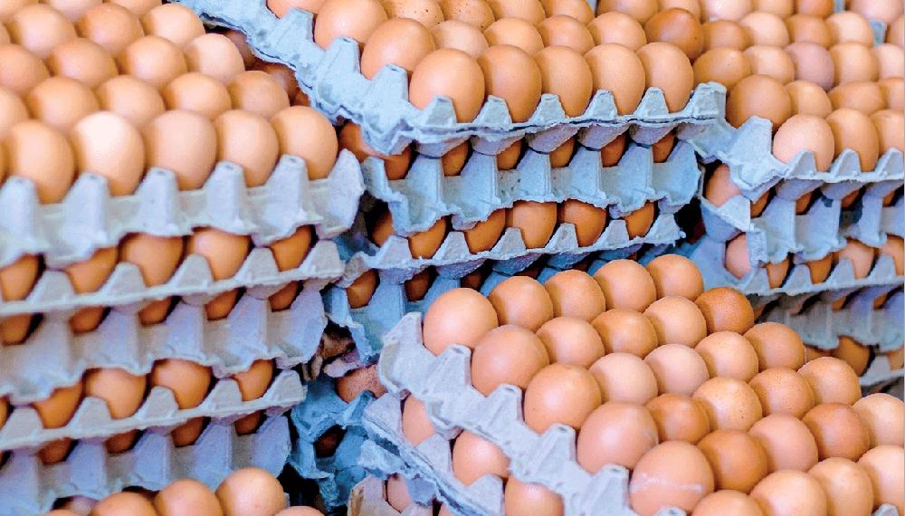 huevos-infocampo