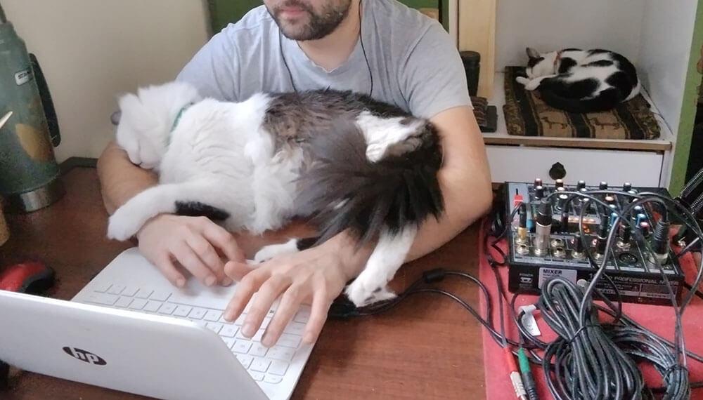 gatos mascotas infocampo