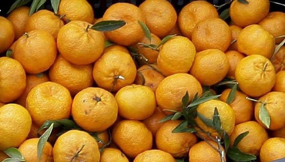 mandarina-criolla-inta-concordia