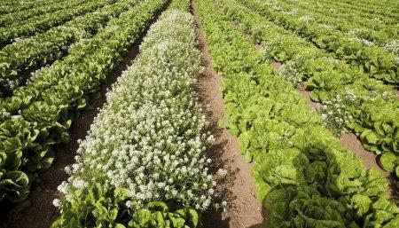 agroecologia buena vida infocampo