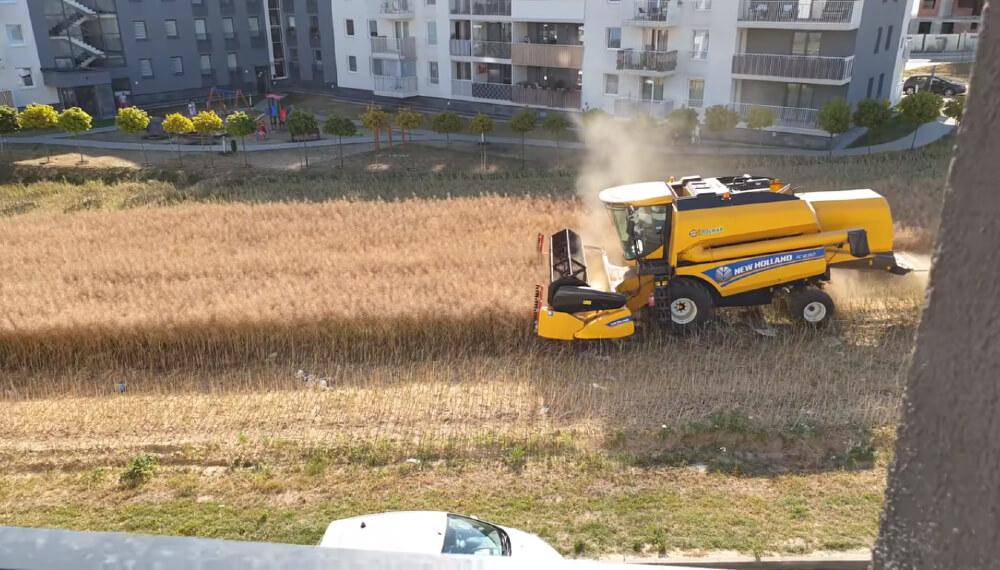 Polonia cosecha en el medio de la ciudad
