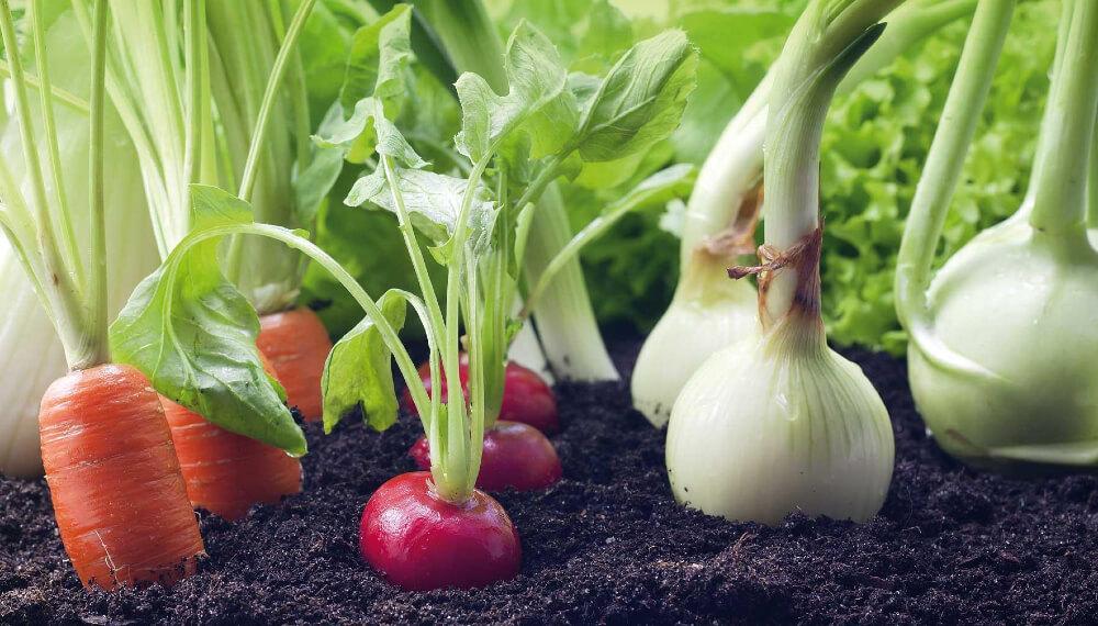Spray para hortalizas