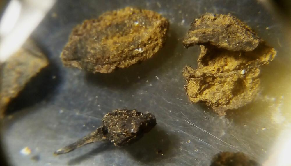 Semillas encontradas