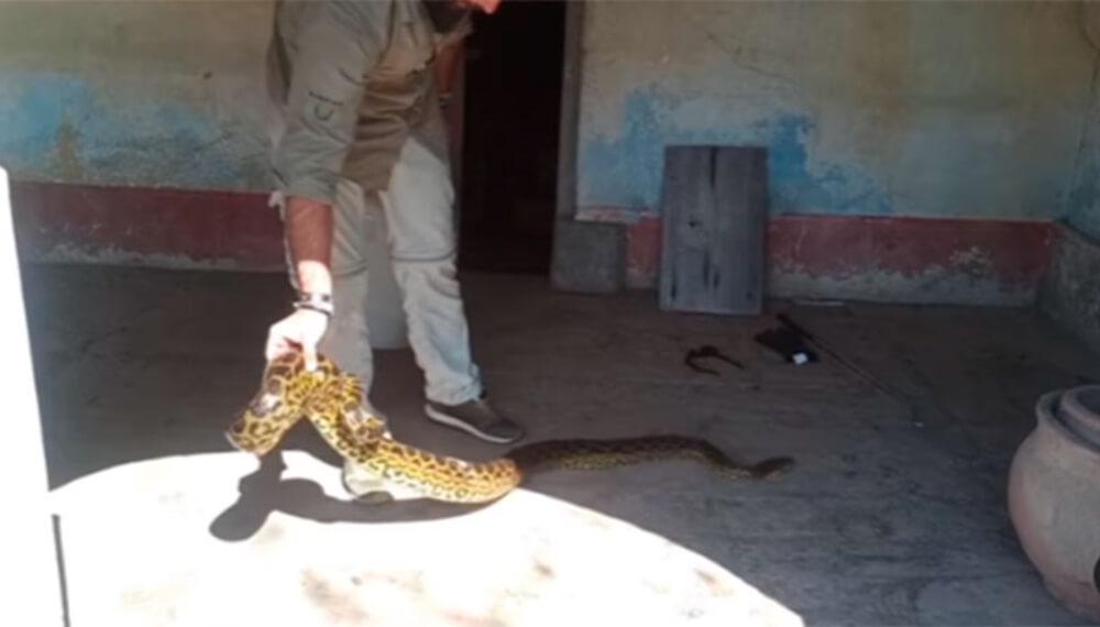 Anacondas en casa abandonada