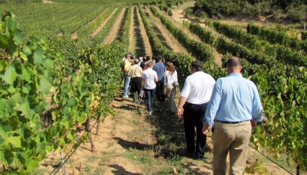 vino turismo