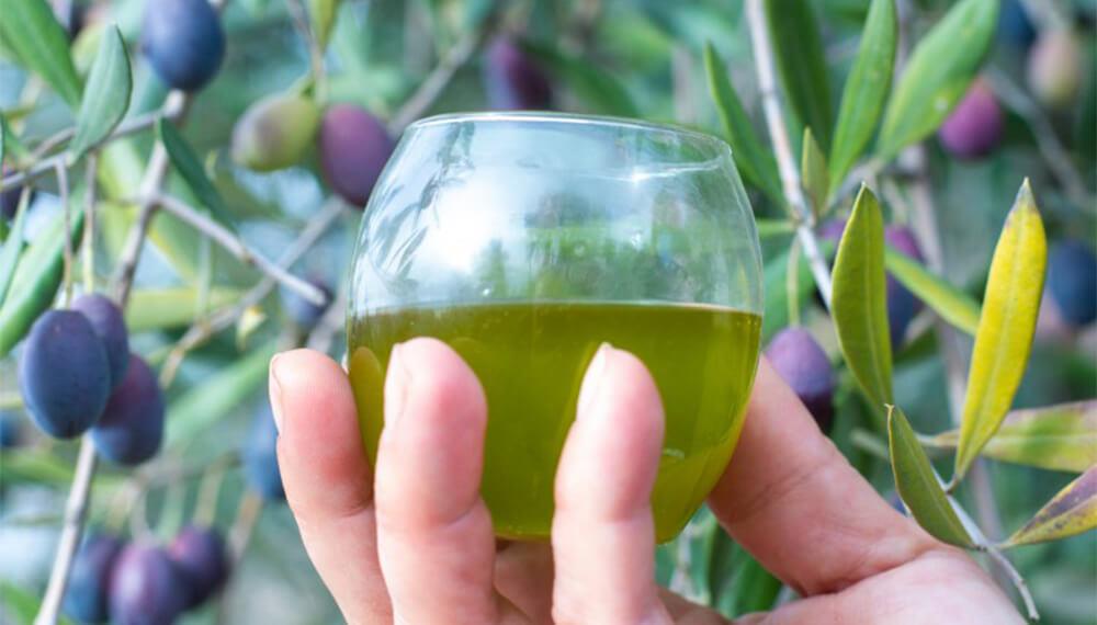 Aceite de oliva - Olivos atrás