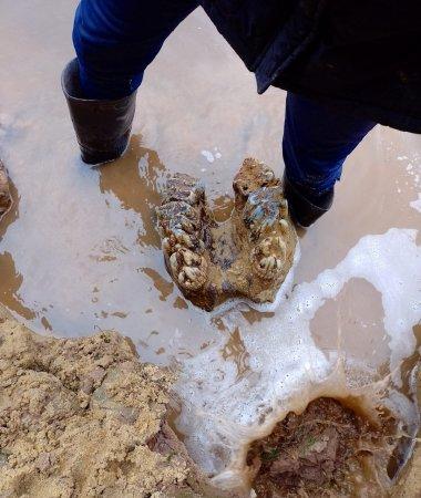 Pescador descubrio mastodonte en Santa Fe