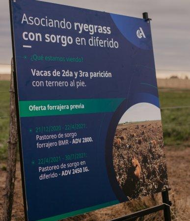 Ryegrass con sorgo