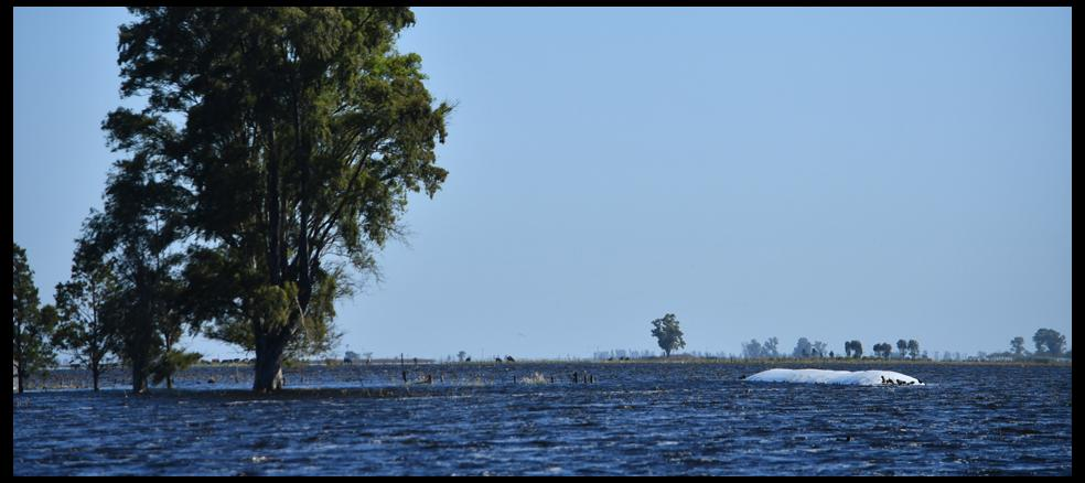 i26514-general-villegas-inundaciones-campo-960