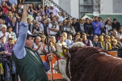 g-c-m-polled-hereford_35815554760_o